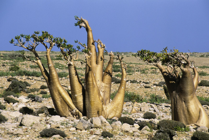 Socotra: a living museum